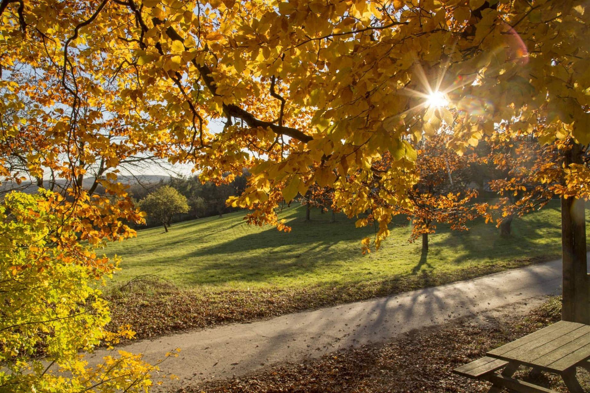 Herbstlicher Weg im Biosphärenpark Wienerwald