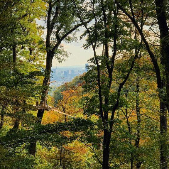 Waldseilpark Kahlenberg