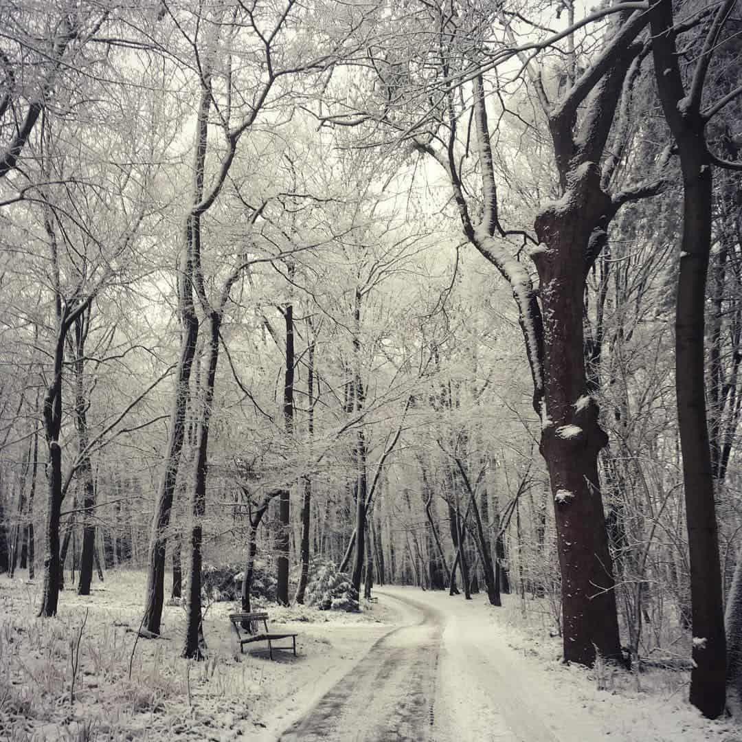 Winterspaziergänge in Wien