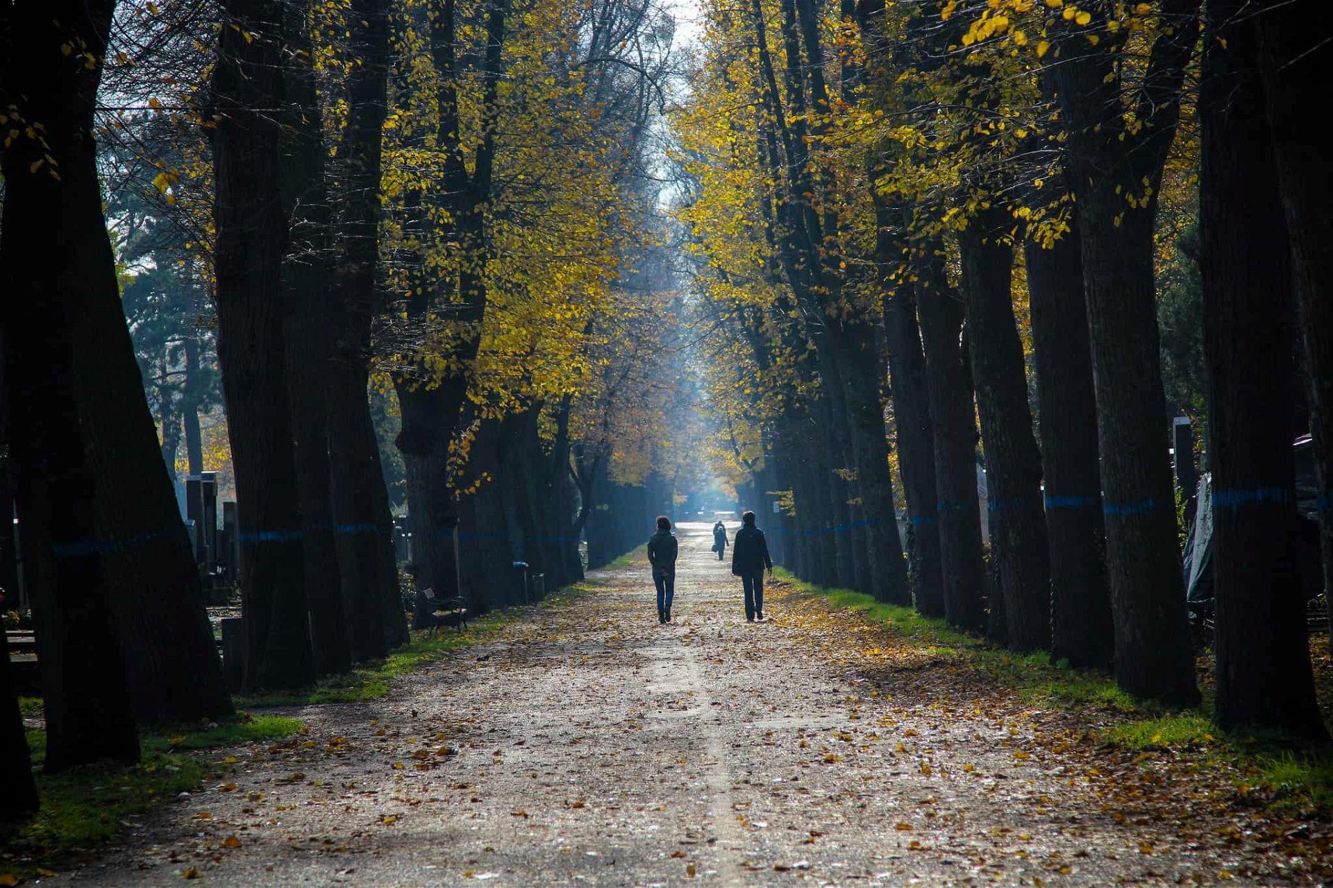 Herbstspaziergaenge - zentralfriedhof
