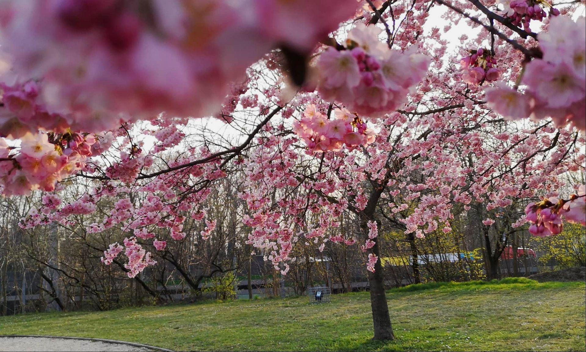 Frühling Allergiker