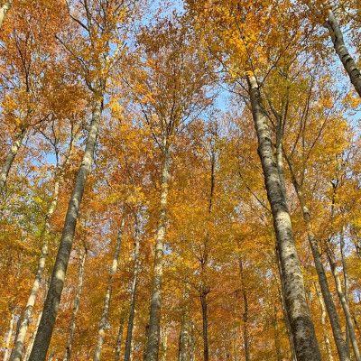 Herbstwald in Oberösterreich