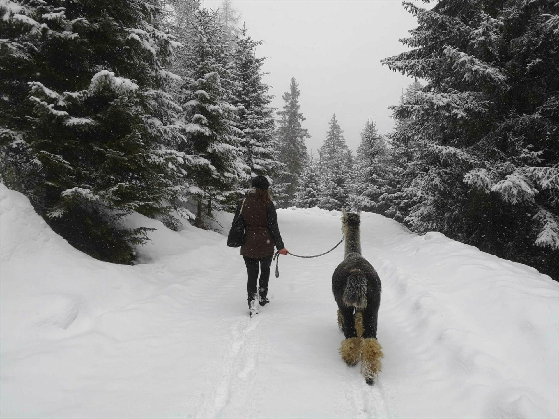 Alpaka Wandern Österreich