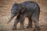 Shutdown Babyelefant