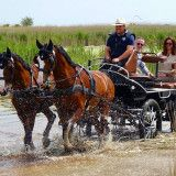 Pferdekutschenfahrt Neusiedler See