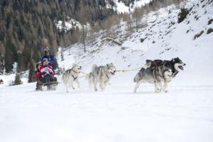 Winterurlaub in Kärnten: Husky Safari