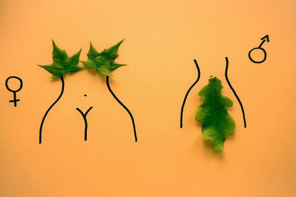 geschlechter nachhaltig