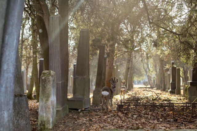 Rundumadum Weg Zentralfriedhof