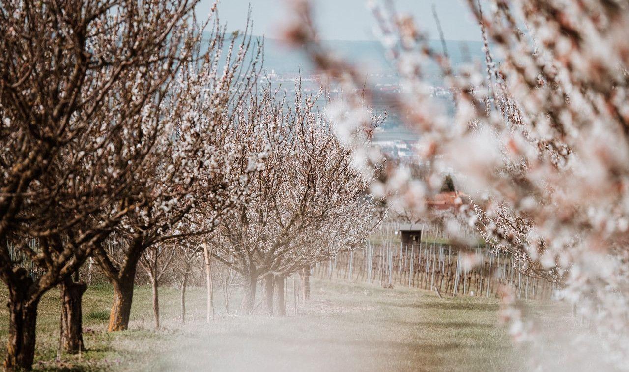 Wachau Niederösterreich Frühling