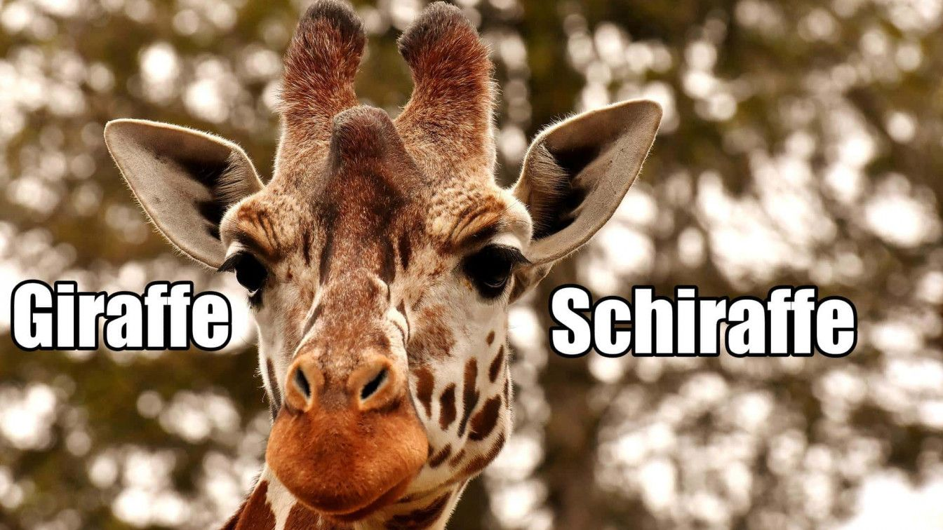 Giraffe Österreich nicht sagen