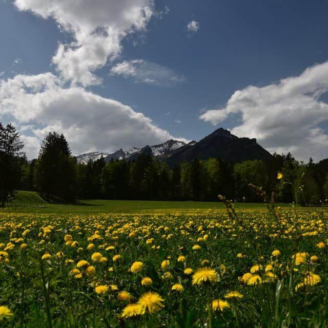 Naturabenteuer in Vorarlberg