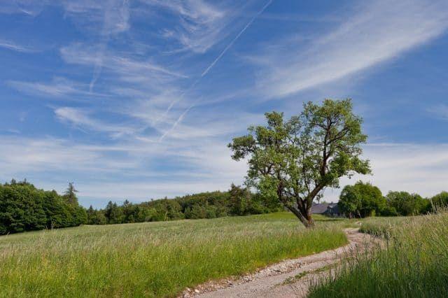 Wienerwald Wanderweg zum Schutzhaus Schöpfl