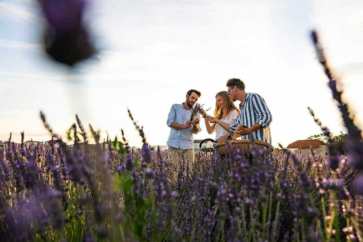 Auf den Lavendelfeldern der Duftmanufaktur Steppenduft, Sponsored (c) Manuel Hahn   1000things