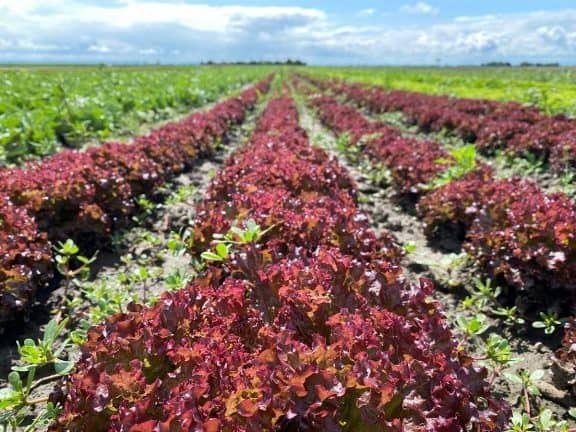 Frisches Bio-Gemüse vom Feld (c) Alice Bogni   1000things