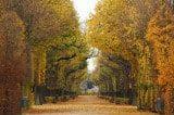 Herbst Wien