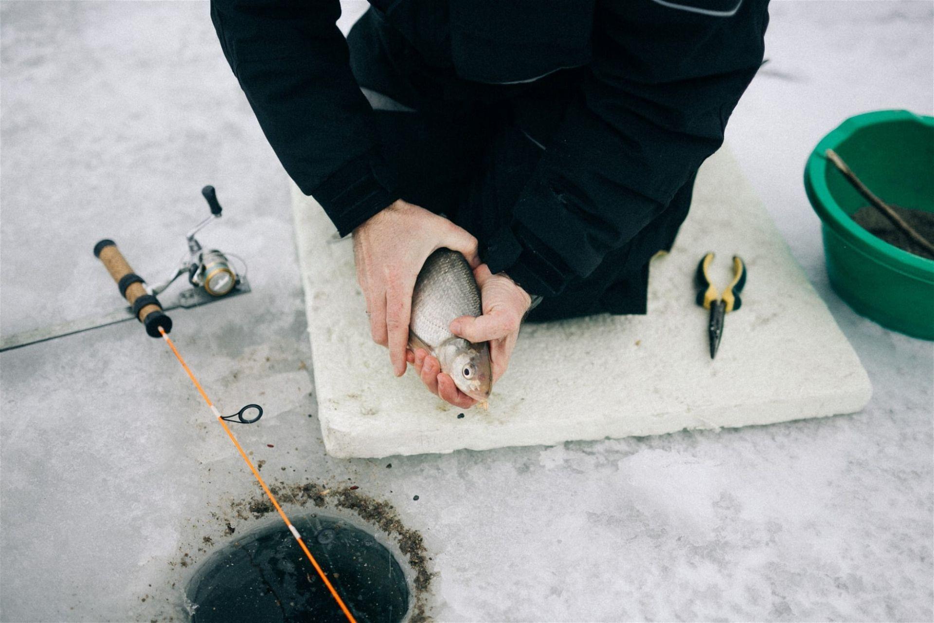 Eisfischen in Österreich: Ottensteiner Stausee Brachse