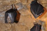 Höhlen Niederösterreich
