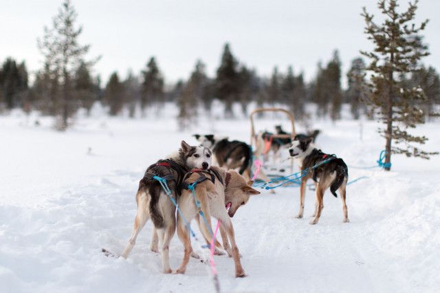 husky-ranches