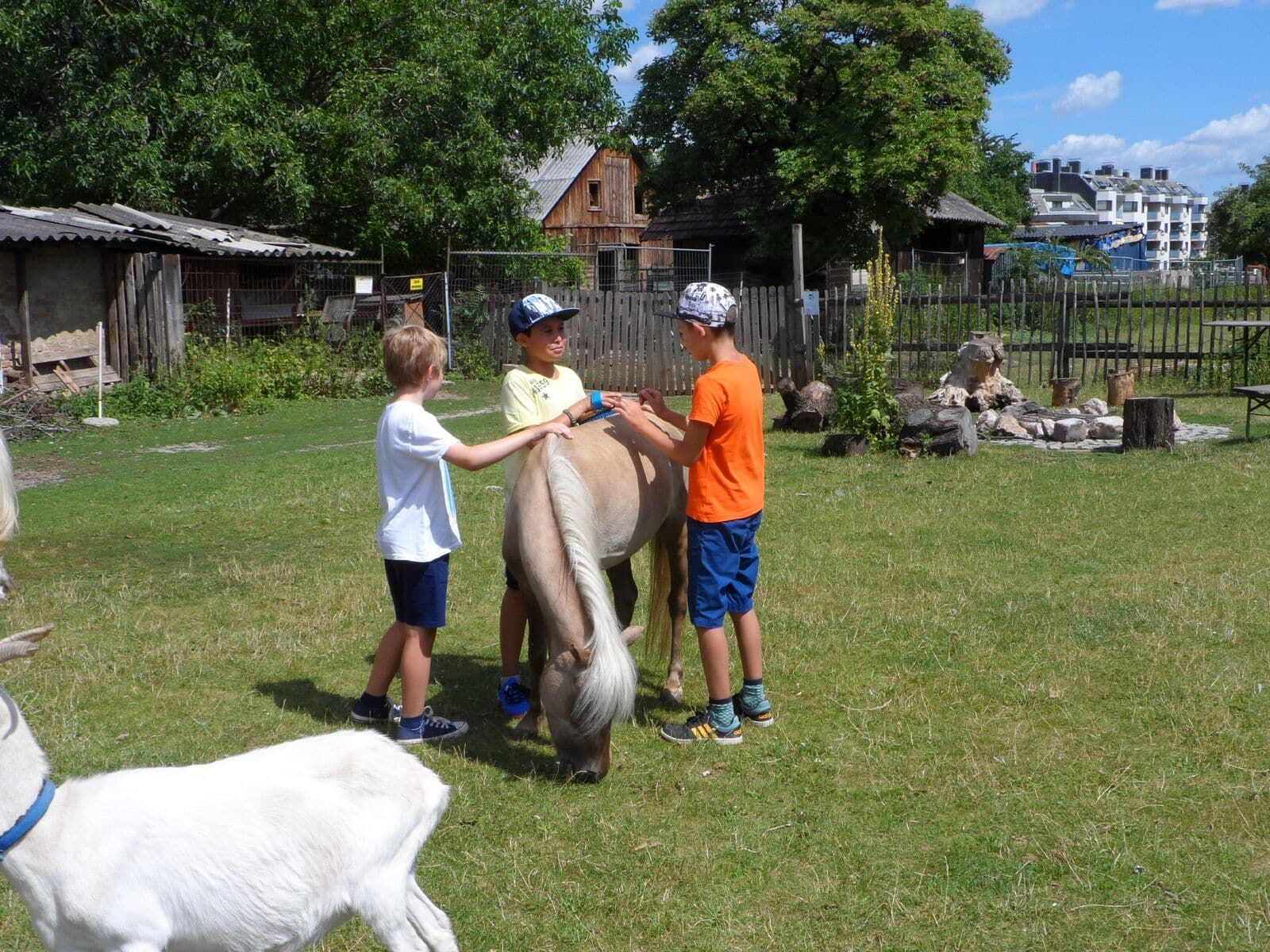 Erlebnishof Simmering: Kinder streicheln eines der Ponys