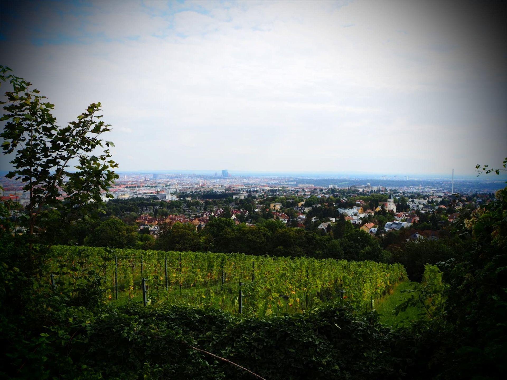 Wilhelminenberg