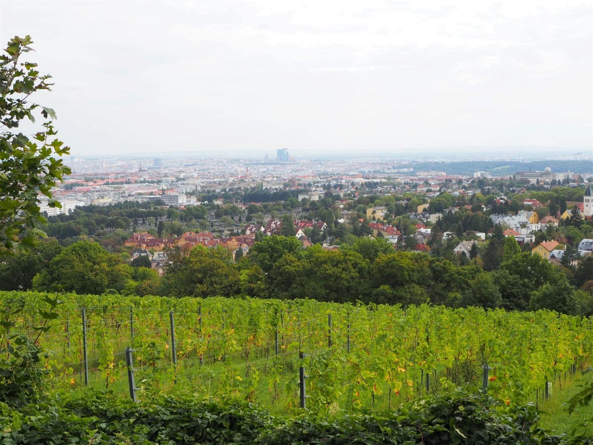 Heurigen Wien