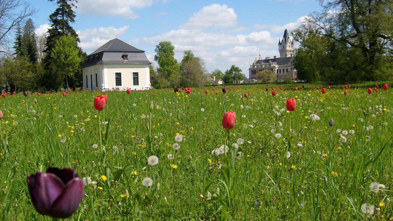 Grafenegger Frühling