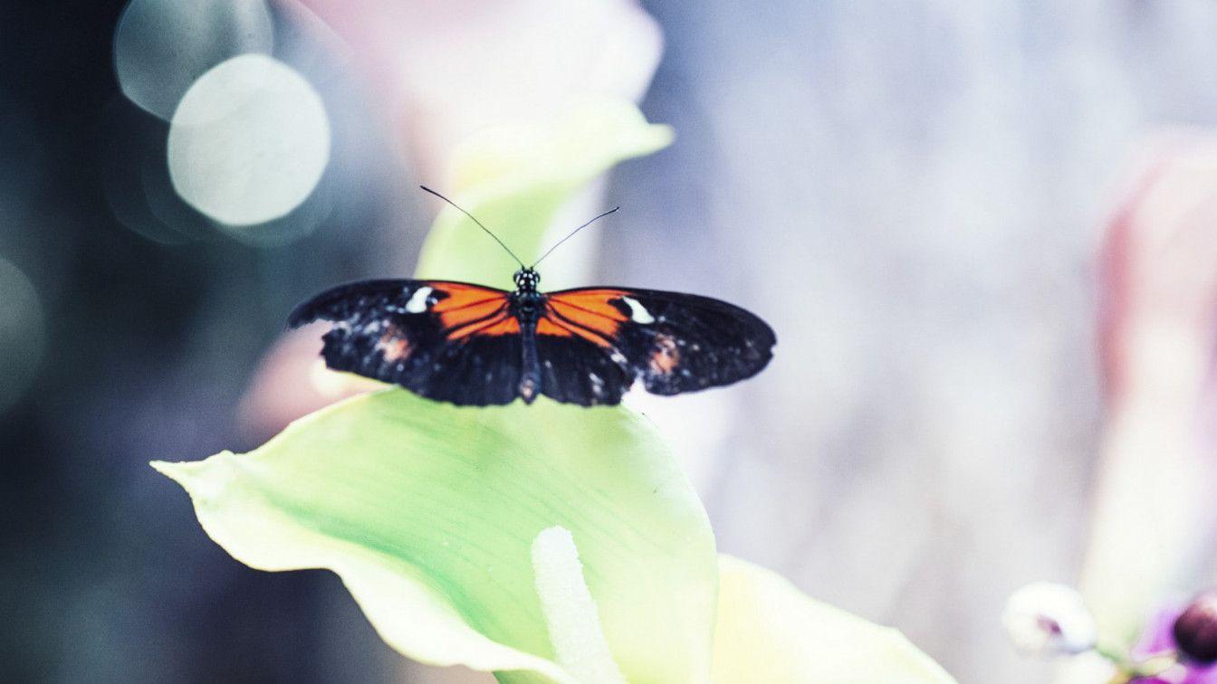 Schmetterlinghaus in wien