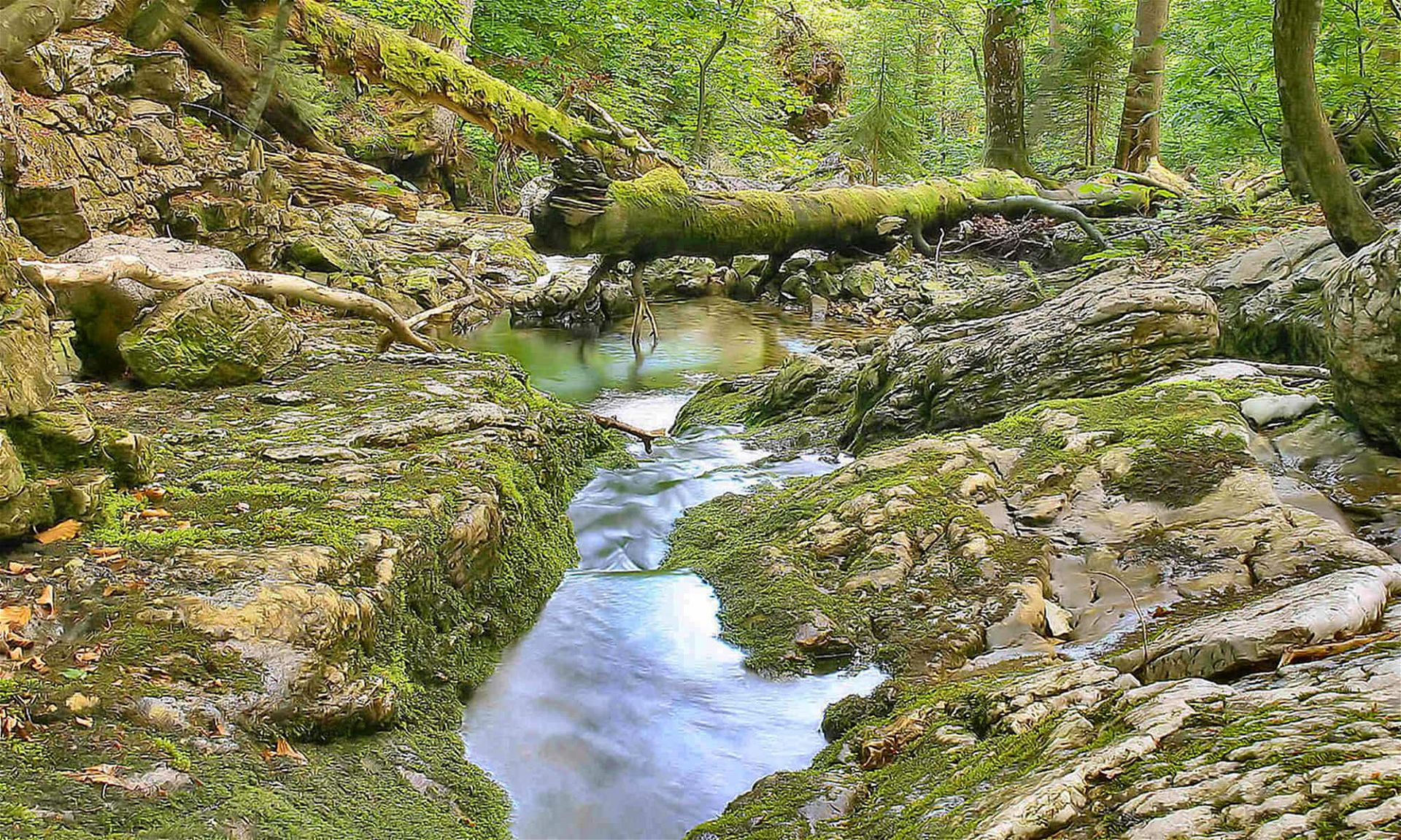 Bach im Rothwald, Wildnisgebiet Dürrenstein