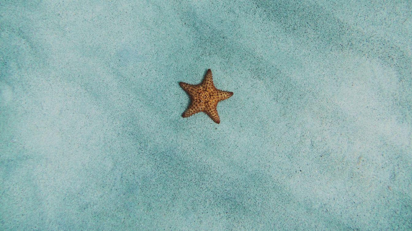 Seestern allein am Seegrund