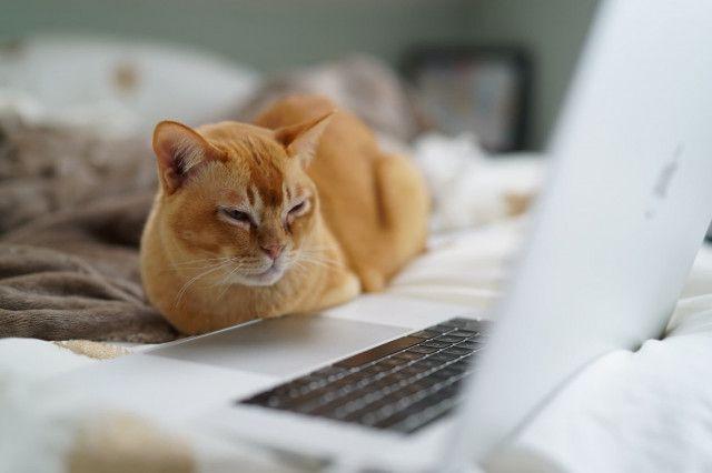 Katze vor Computer