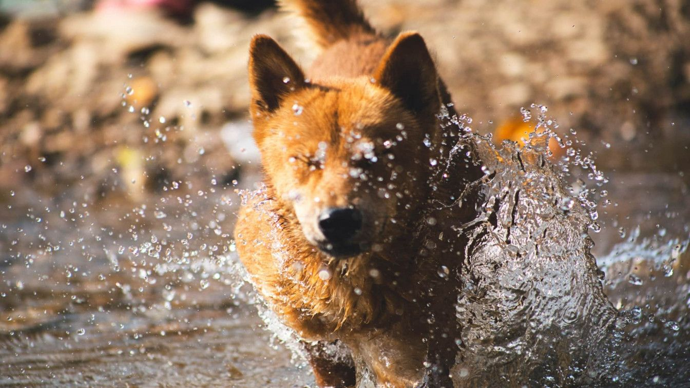 Hunde läuft durch Wasser